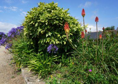 Fleurs domaine dulaunay0002