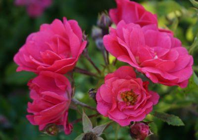 Fleurs domaine dulaunay0011