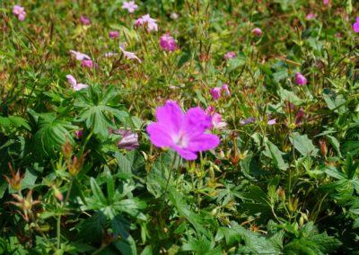 Fleurs domaine dulaunay0004