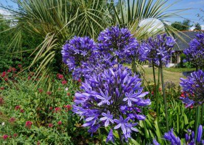 Fleurs domaine dulaunay0007